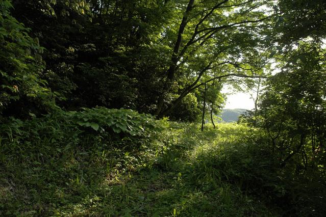犬の散歩コース3 アドベンチャーコース その3(完結編)