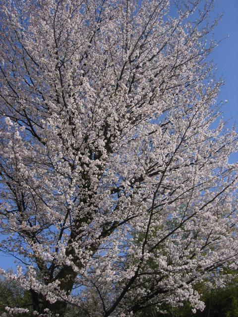 春うらら^^