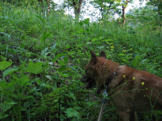 犬の散歩コース2 サバイバルコース!続編