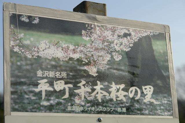 ちっちゃい春 11 平 1000本桜の里