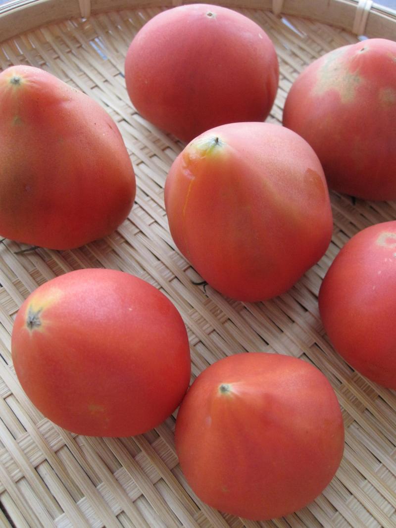 decoの小さな台所。-濃縮トマト
