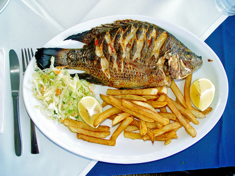 ティラピアは淡水魚です!
