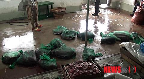 韓国の不衛生な秘密倉庫、解体されたクジラ肉が散乱
