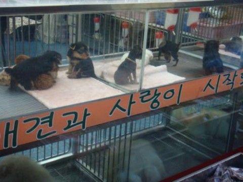 バ韓国で飼い犬が屑チョンを死傷させる事故多発