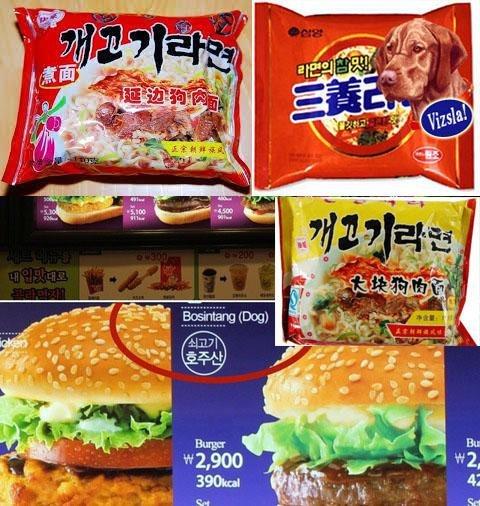 犬を食べる屑バ韓国塵どもを37564に!