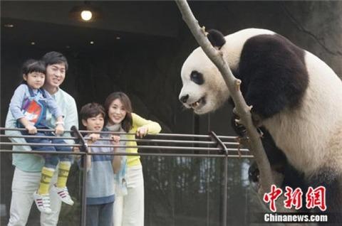 生気がまったくないバ韓国のパンダ