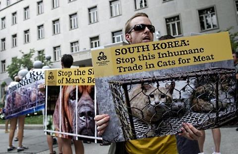 国際動物保護団体が犬喰い韓国を非難するデモ