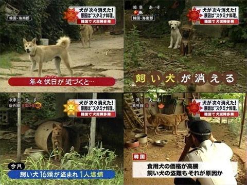 犬肉を食らうキチガイバ韓国塵ども
