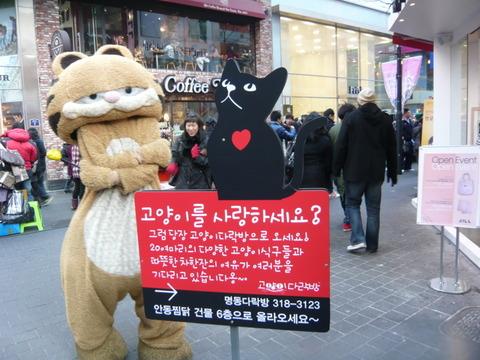 バ韓国の猫カフェでは猫肉スープが出てきそう
