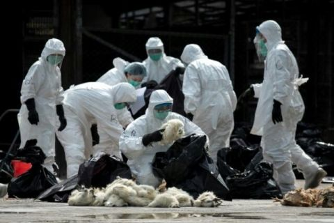 五輪直前、バ韓国で鳥インフル発生