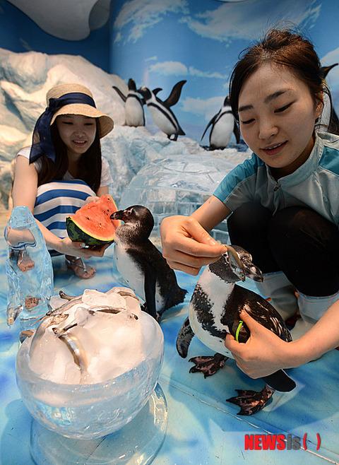 水族館。ペンギンのエサやりの模様