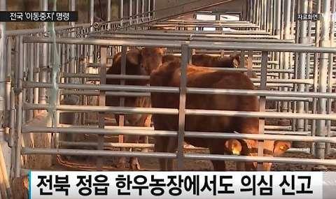 鳥インフルに続き口蹄疫発生中のバ韓国