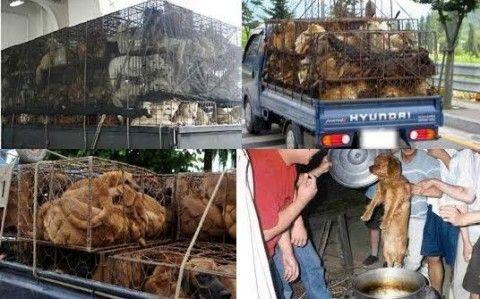 犬肉を喰らうバ韓国塵どもに死を!