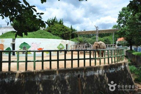 バ韓国の動物園、動物虐待が日常化