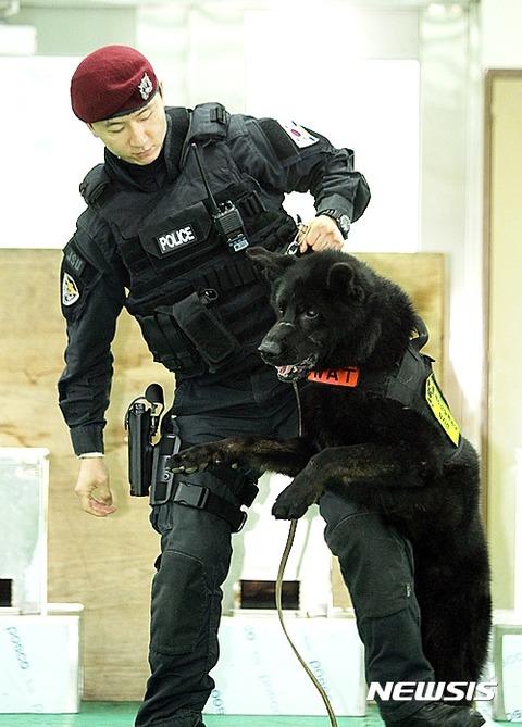 この後、関係者に美味しく食べられてしまうバ韓国の警察犬