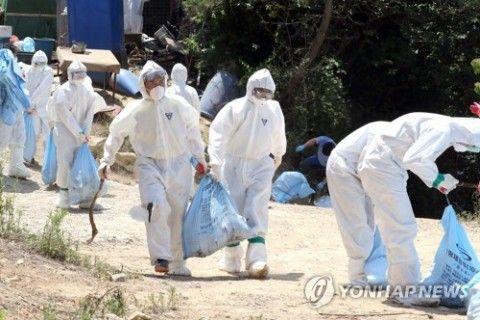 またまたバ韓国で鳥インフル発生!