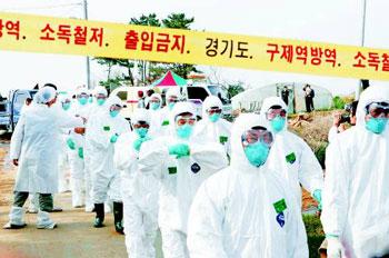 バ韓国での鳥インフル発生はもはや日常風景