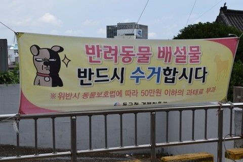 バ韓国の都市は犬の糞だらけ
