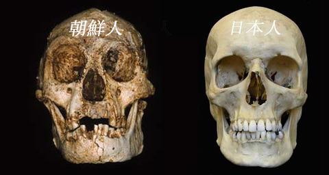 頭蓋骨からして不細工な屑チョンどもwwww