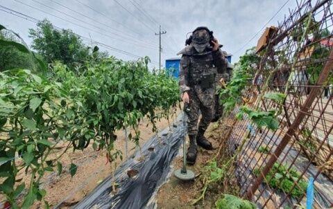 バ韓国製の地雷が農家に大被害を与えているww