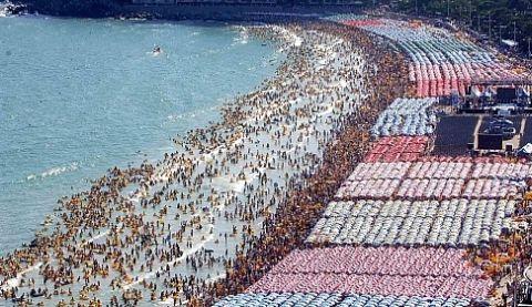ダニが集まるバ韓国の海雲台(ヘウンデ)海水浴場