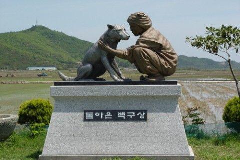珍島犬を崇拝するキチガイ宗教