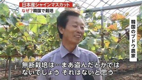日本の品種を盗むのがバ韓国の常套手段