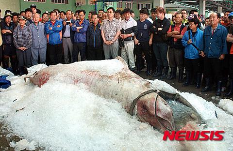 鯨を乱獲するバ韓国塵どもに死を!