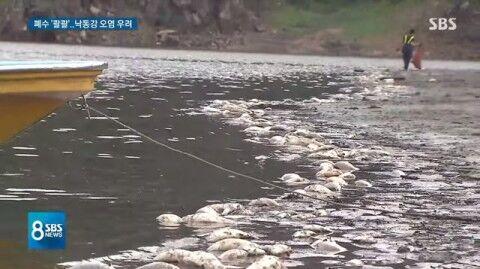 バ韓国の海産物は汚染まみれ