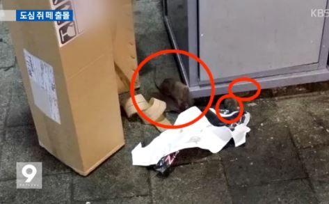 ソウルに溢れかえるネズミの群れ