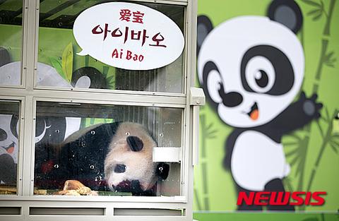 自殺しそうな顔をしているバ韓国のパンダ