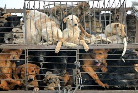 犬の命を守るためバ韓国塵どもを37564に