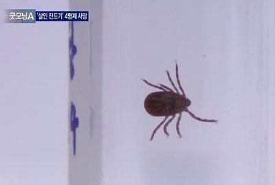 バ韓国で殺人ダニ発生中!