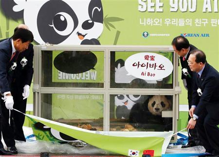 世界中で最も不幸なパンダ