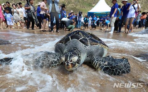 バ韓国塵ならウミガメを捕まえて食べそう