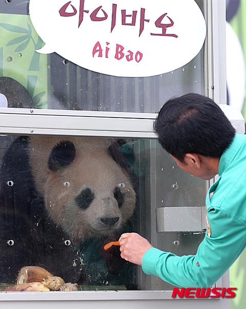 臭い屑チョンに飼われるパンダに同情