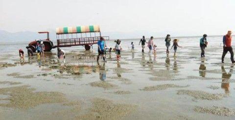 大腸菌まみれのバ韓国の干潟