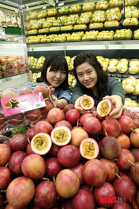 糞まずそうな韓国産フルーツ