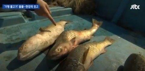 バ韓国では奇形魚が当たり前のように市場に出回っている