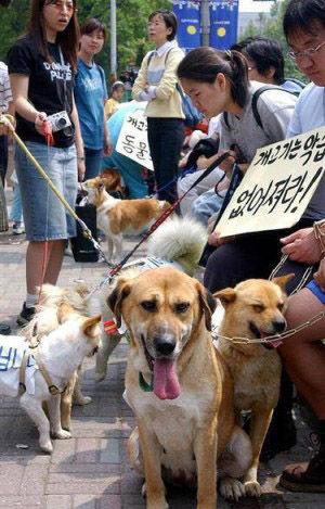 犬肉を喰うバ韓国塵どもに死を