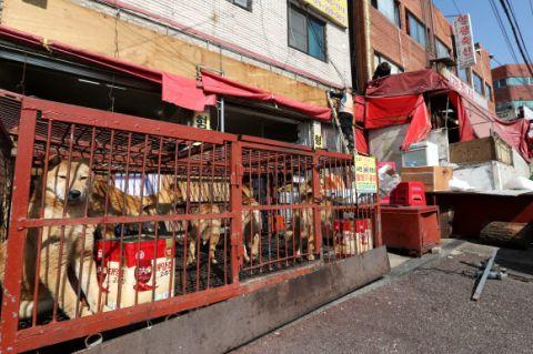 犬食が未だ盛んなバ韓国