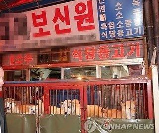 犬肉を喰うバ韓国塵どもに死を!