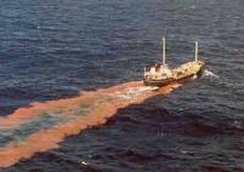 人糞、大腸菌まみれの海で作られる韓国海苔