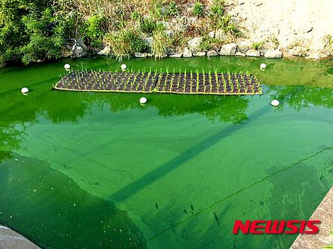 バ韓国中の河川が死の川になるのも時間の問題