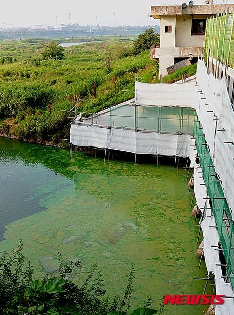 悪臭を放っている緑藻、屑チョンにとっては芳しい匂い