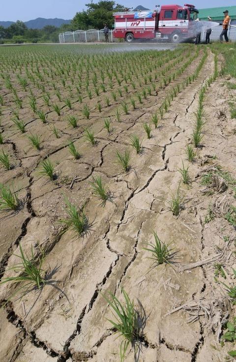 毎年干ばつ被害にあうキチガイバ韓国