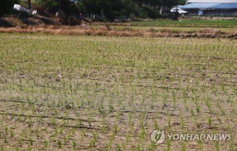 田畑が干上がっているバ韓国