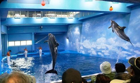 長生浦クジラ生態体験館のイルカショー