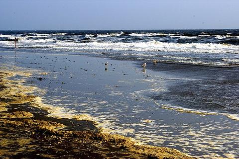 韓国近海は赤痢菌に汚染されてます