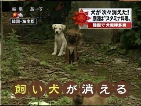 バ韓国では飼い犬を喰うのが当たり前